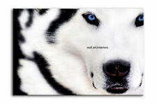 WHITE WOLF CANVAS ART PRINT PICTURE WALL ART framed A2