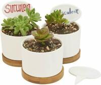 """3 Pack Planter Pots Indoor Flowerplus 3.1"""" White Ceramic Cactus Flower Plant Pot"""