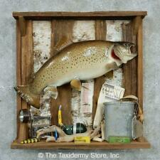 #13301 C | Captain's Classic Brown Trout Display Mount