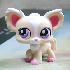 Chihuahua Pink ears  #1892 Action Figure gift  LPS mini LITTLEST PET SHOP