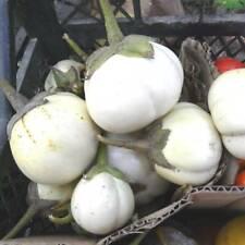 Eggplant Seeds Kumari Sri Lanka aubergine organic non gmo 20 seeds D