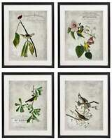 Vintage Bird & Botanical No.4 Home Decor Wall Art Print Set of 4 Prints UNFRAMED