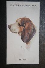 Beagle   Vintage Dog Portrait Card # VGC