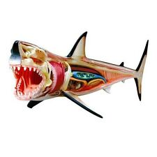 4D Vision Great White Shark Anatomy Model - 26111 - Learning Set New