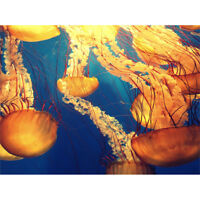 Jellyfish Group Underwater Ocean Wall Art Print
