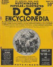 Hutchinson'S Dog Magazine Breed Feature Griffon Bruxellois *Rare*