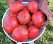 Pruden's Purple Heirloom Tomato Seeds -72 to 80 days 100+ seeds