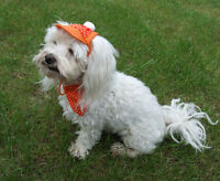 Perros Gorra - Tapa Cape - Juego Cappy + Pañuelo Naranja Dots Hundecappy