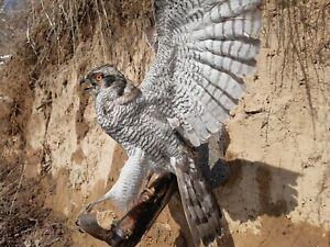 Bird of Prey taxidermy CITES paper