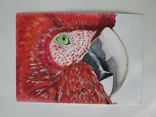 Hand drawn animal pictures, Original Contemporary RED PARROT