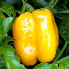 150 Golden California Wonder Sweet Bell Pepper Seeds - Free Gift - COMB S/H