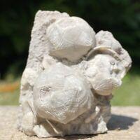 RARE Cystoids – Echinoenrinites - Ordovician - Russian - FSR237 ✔100%genuine