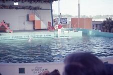 Porpoises At Florida Live Porpoise / Dolphin Show 1965 35mm Photo Slide