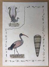 Dessin Mine de Plomb Aquarelle Etude d'oiseaux sur papier.XIXe Siècle.