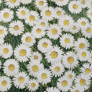 White and Green Daisies Floral Design Wipe Clean PVC Vinyl Tablecloth 140cm Wide