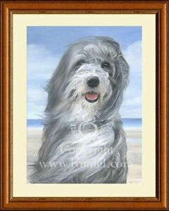 BEARDED COLLIE portrait fine art print by Lynn Paterson