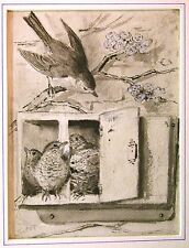 ILLUSTRATIONS FEEDINGCHICKS IN MCCULLAMS  OLD POST BOX WASH WILLIAM FOSTER C1890