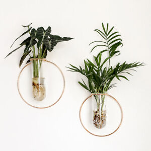 Modern Wall Hanging planter with Test Tube Glass Planter Vase