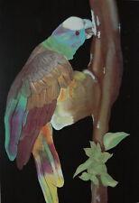 "Vintage Print ""Parrot"" by Annick Aubert  27""x24.5"" Unsigned Modernism 1970-1989"