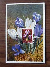 Private maximum card 1956 Crocus flowers LUXEMBOURG maxicard, maxi card, MC 5
