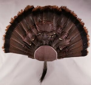 DIY Turkey Fan & Beard Mount Kit