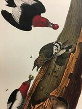 Antique Print Red Headed Woodpecker 1890 Color Bird in Tree Eating Worm Berry