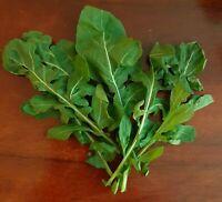 Rucula  para Ensaladas Eruca Sativa - Rucola 2500  Rúcula Semillas Seeds huerto