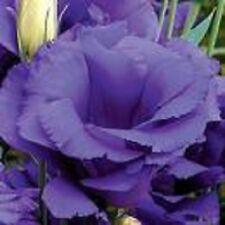 20+ Blue Echo Lisianthus Flower Seeds / Annual / Great Cut Flower / Gift