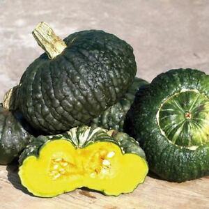 Pumpkin Marina di Chioggia - 5+ seeds - Semillas - Graines - ITALIAN VARIETY!