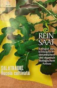 Salatrauke Rucola coltivata Samen  Demeter Saatgut Reinsaat Kürbissamen Reinsaat