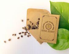 Hawaiian Baby Woodrose seeds - 100 units