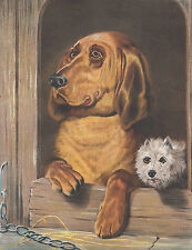 WEST HIGHLAND WHITE TERRIER DOG & BLOODHOUND DOG LITHOGRAPH ART PRINT 1870