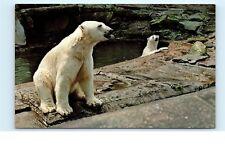 Pittsburgh Zoo Polar Bears Exhibit Pool PA Pennsylvania Vintage Postcard C63