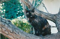 Tree Cat FOUND PHOTOGRAPH Color FREE SHIPPING Original Snapshot VINTAGE 95 30 X