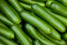 Cucumber Seeds Alpha Beta cucumber organic non gmo 10 seeds Ukraine D