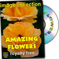 Amazing Flowers RoyaltyFree Image Collection, Personal