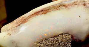 87.6 ct Opalised Clam Shell fossil from Coober Pedy Rough Rub
