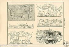 Calf Veau Boeuf Génisse Betail Beef Heifer Cattle Egypt GRAVURE OLD PRINT 1884