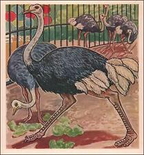 OSTRICH in the Zoo, vintage print, authentic 1941