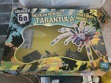 Grandi messicano redknee TARANTULA 3D ANATOMICO MODELLO SPIDER mortale 60