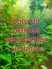 LOTE DE PLANTAS PARA ACUARIO  PRINCIPIANTES, Ambulia, Cola de zorro, Hygrophila