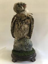 Taxidermy Owl Bird of prey Real Stuffed Animal