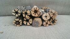 "2 PCS 6"" Cholla Wood Cactus Organic Untreated Aquarium Driftwood Choya"