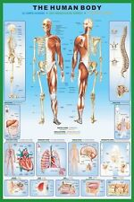 Human Body Poster - The Human Body - Anatomy Educational Poster PP30727