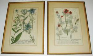 1737 Pair of Framed Flower/Botanical Prints from Phytanthoza Iconographia