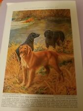 Eh Miner Golden & Curly Coated Retriever bookplate 1937 National Geographic Mag