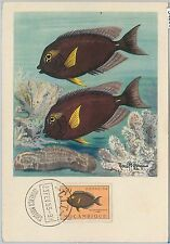 54283 - MOZAMBIQUE -  POSTAL HISTORY: MAXIMUM CARD - 1955  FISH