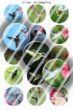 Pre-Cut Bottle Cap Images Hummingbirds Collage Sheet R401 - 1 Inch Circles