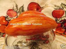 Casady's Folly Tomato Seeds 20  NON-GMO Organic Garden Angel Vegetable Seeds