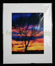 Tree in Sunset #1 Limited 1st Edition Photo 3/100 Art